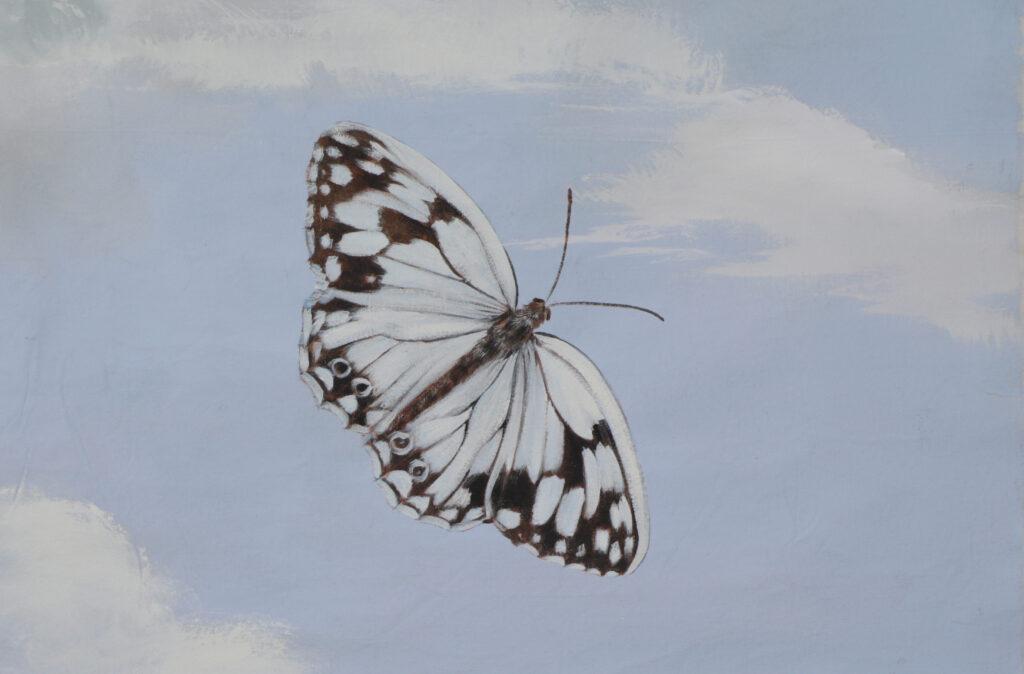 farfalla bianca e marrone